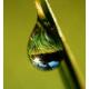 Sweet Rain Oil