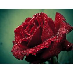 Rose Stick  Incense