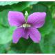 Violet Stick  Incense