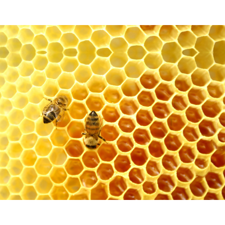 Honey Stick  Incense