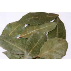 Bay Leaves (Laurus nobilis)