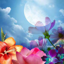 Moon Flower Artisan Perfume