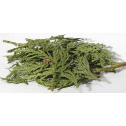 Cedar Stick Incense