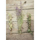 Lavender, Sage and Rosemary Stick Incense