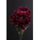Carnations Of Love Oil