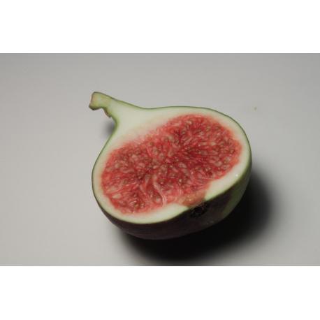 Fig Stick  Incense