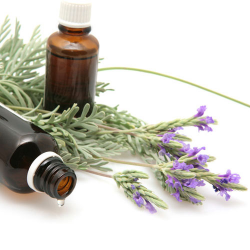 Black Amber & Lavender Oil