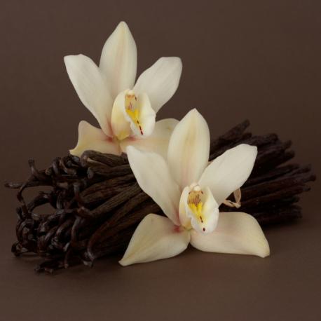 French Vanilla Oil